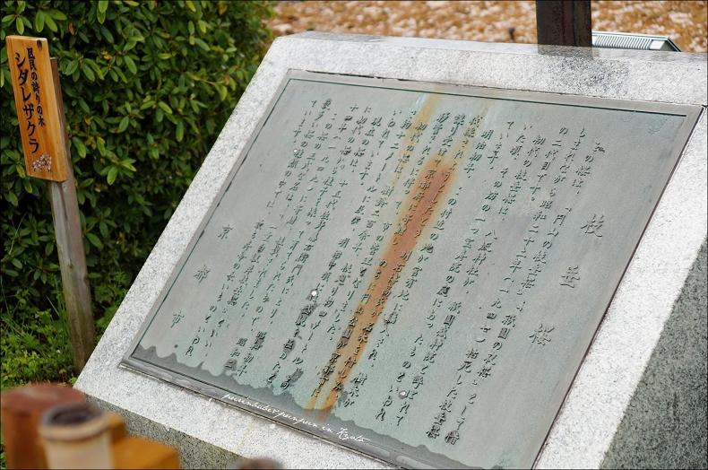 19圓山公園枝垂櫻1