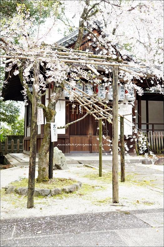 39岡崎神社之櫻1