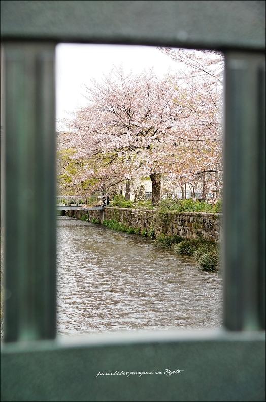 24祇園白川3