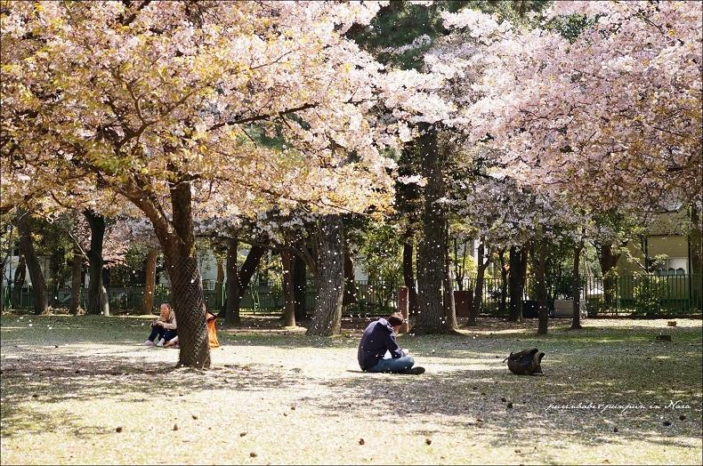 3奈良公園櫻吹雪