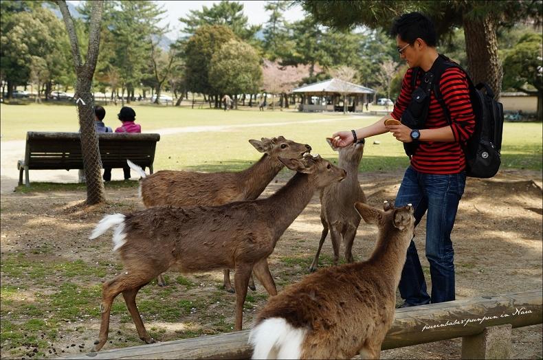 7鹿與仙貝1