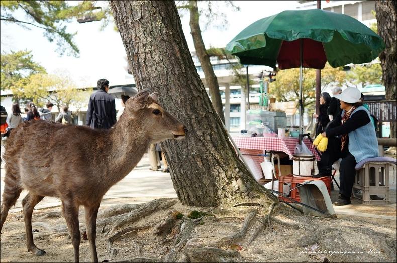 11小鹿與仙貝阿婆