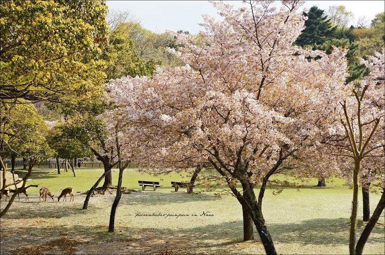 31奈良公園3