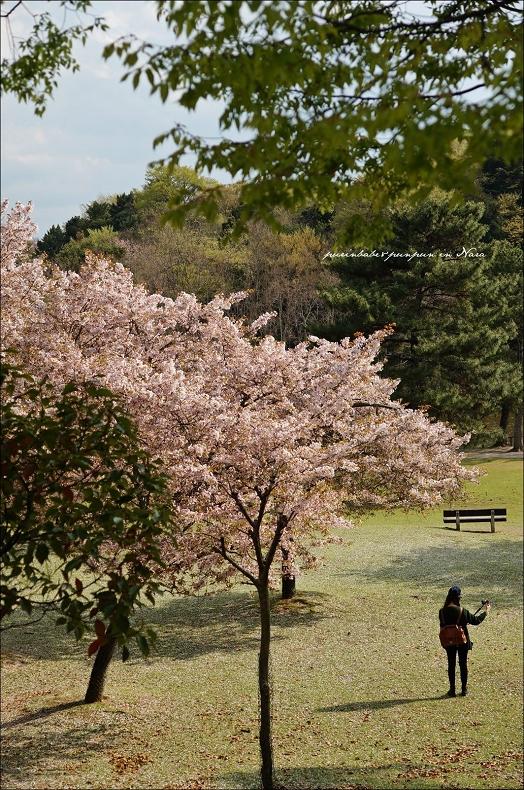 30奈良公園2