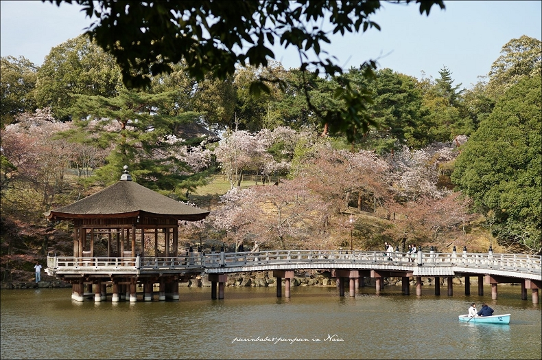 29奈良公園1
