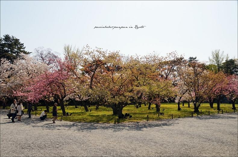 22櫻之園1