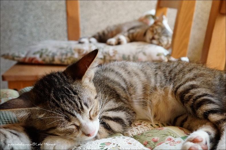 16小貓睡覺