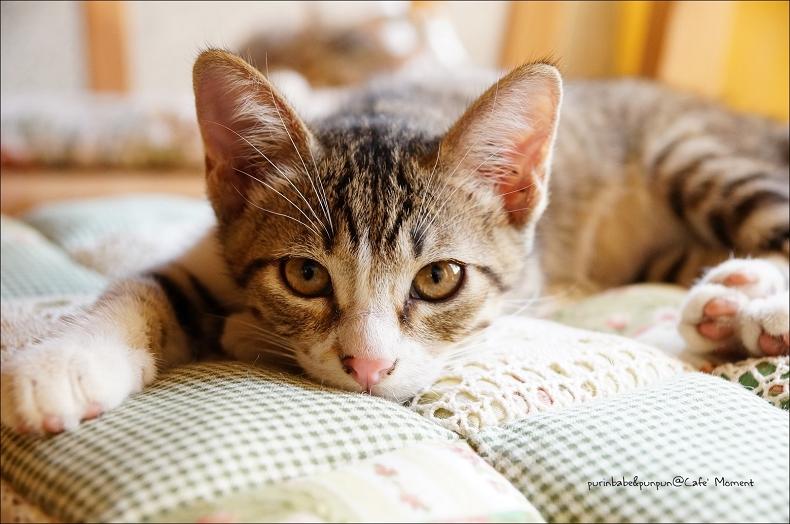 14小貓1