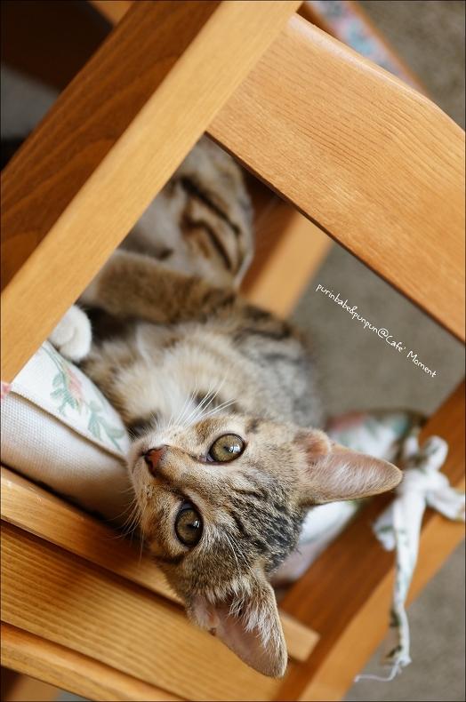 15小貓2
