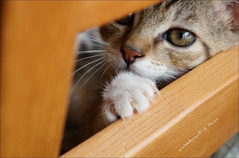 29無辜小貓