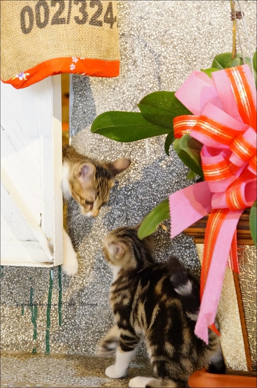 22第三四隻小貓