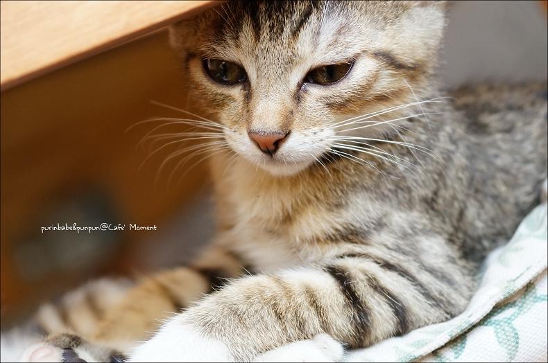 27憂鬱小貓