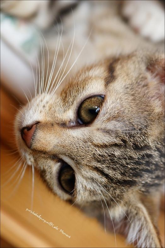 28沈思小貓