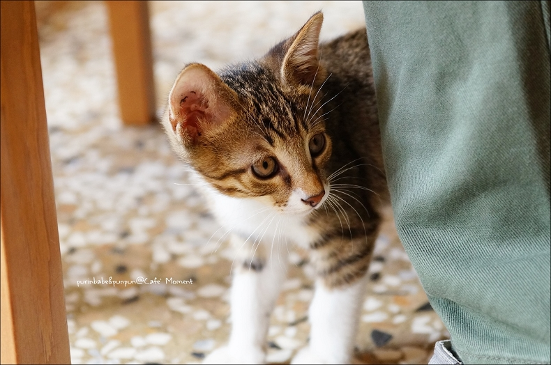 24小貓巡店