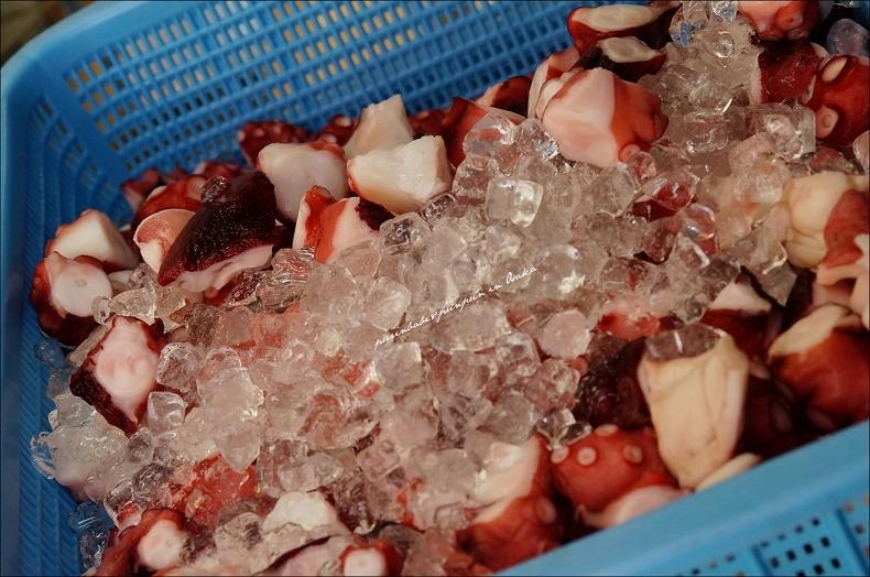 33大章魚