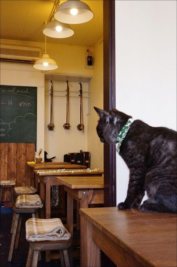 16黑貓1
