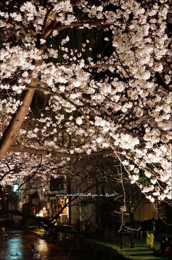 6高瀨川夜櫻2
