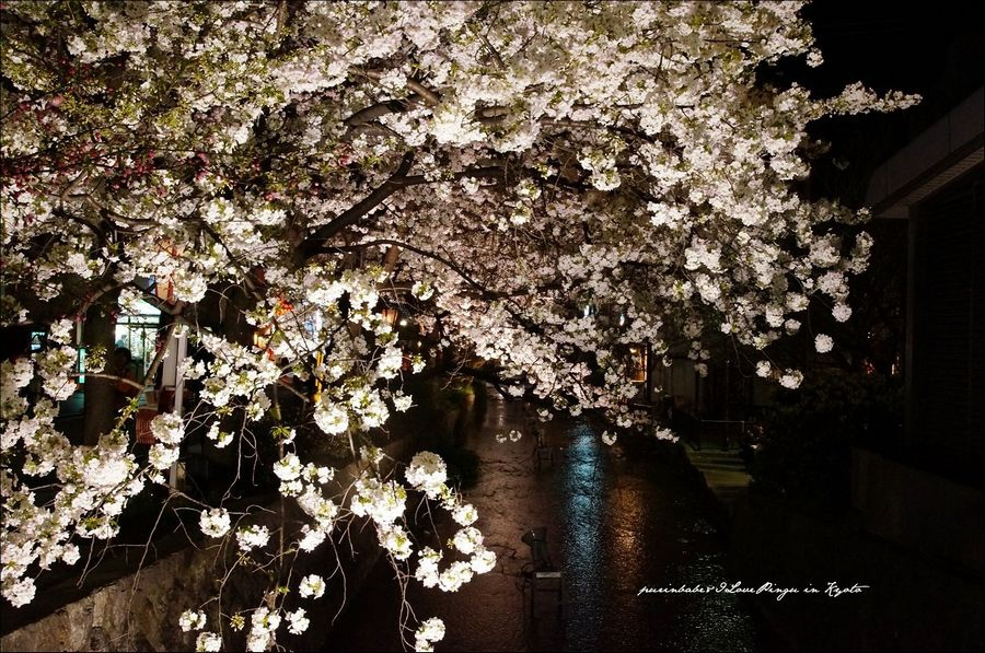 8高瀨川夜櫻4