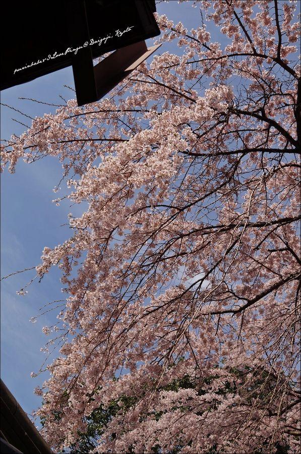 10醍醐寺三寶院1