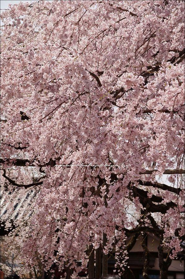 14醍醐寺三寶院5