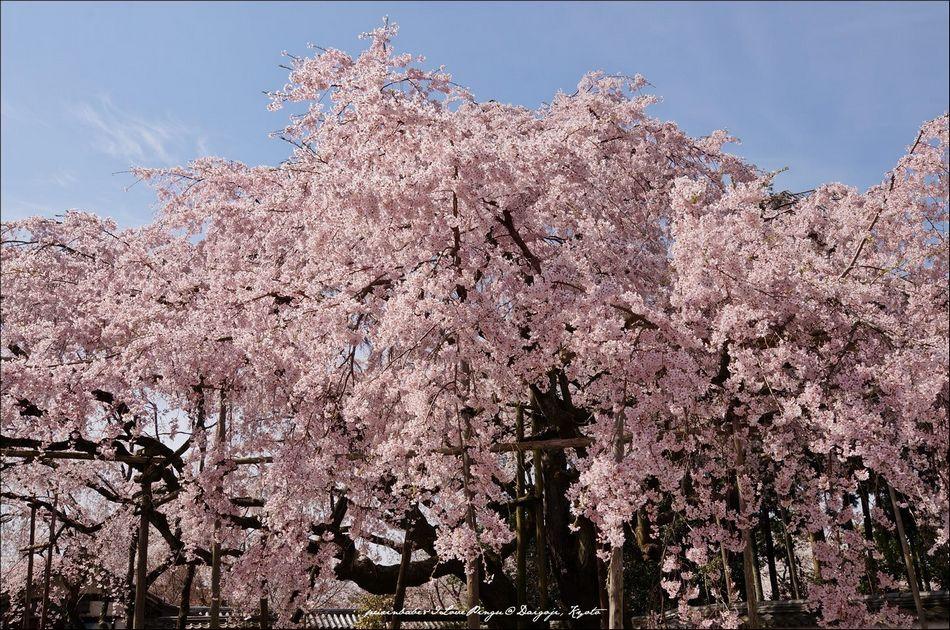 13醍醐寺三寶院4