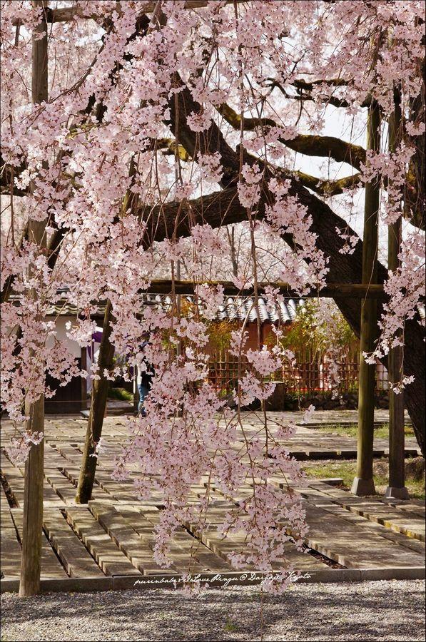 12醍醐寺三寶院3