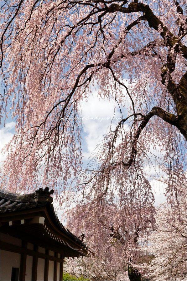 27醍醐寺靈寶館6