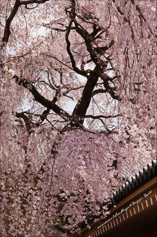 22醍醐寺靈寶館1
