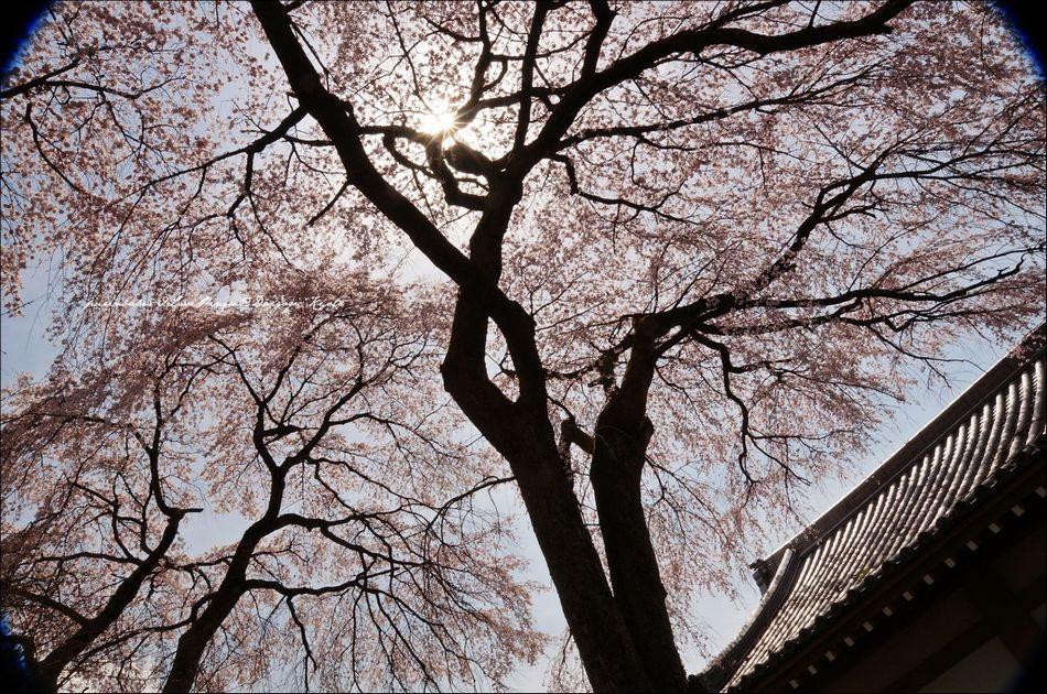 25醍醐寺靈寶館4