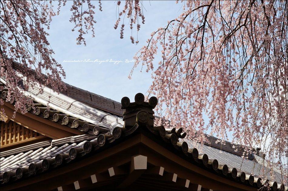 24醍醐寺靈寶館3