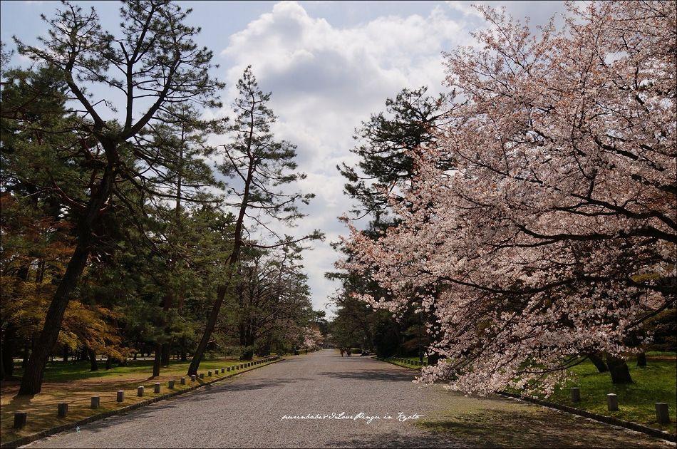 18京都御苑1