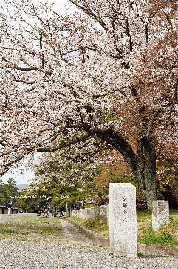 17京都御苑
