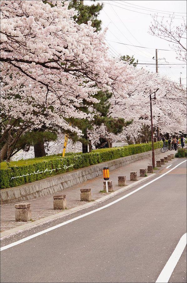 2賀茂川沿岸