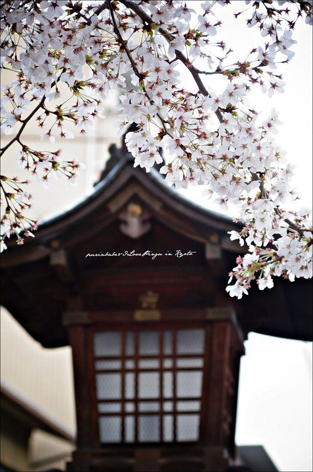 15平野神社境內2