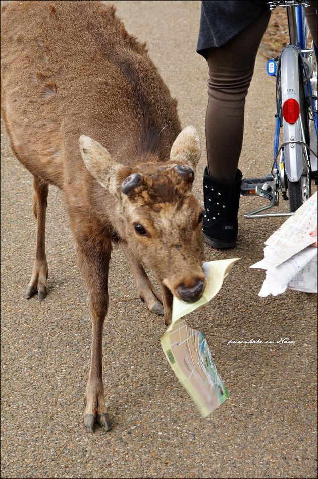 7飢餓的小鹿