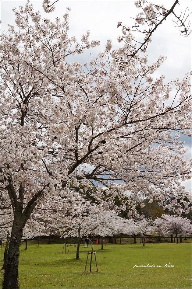 26奈良公園2