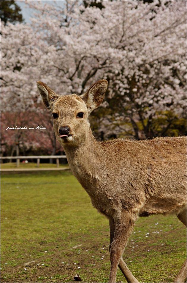 30淘氣小鹿