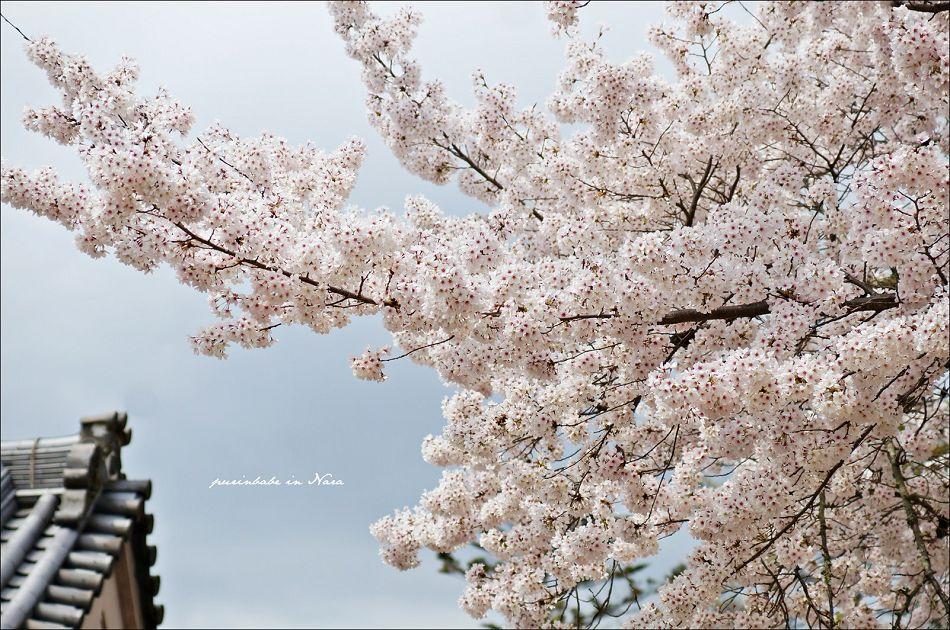 25奈良公園1