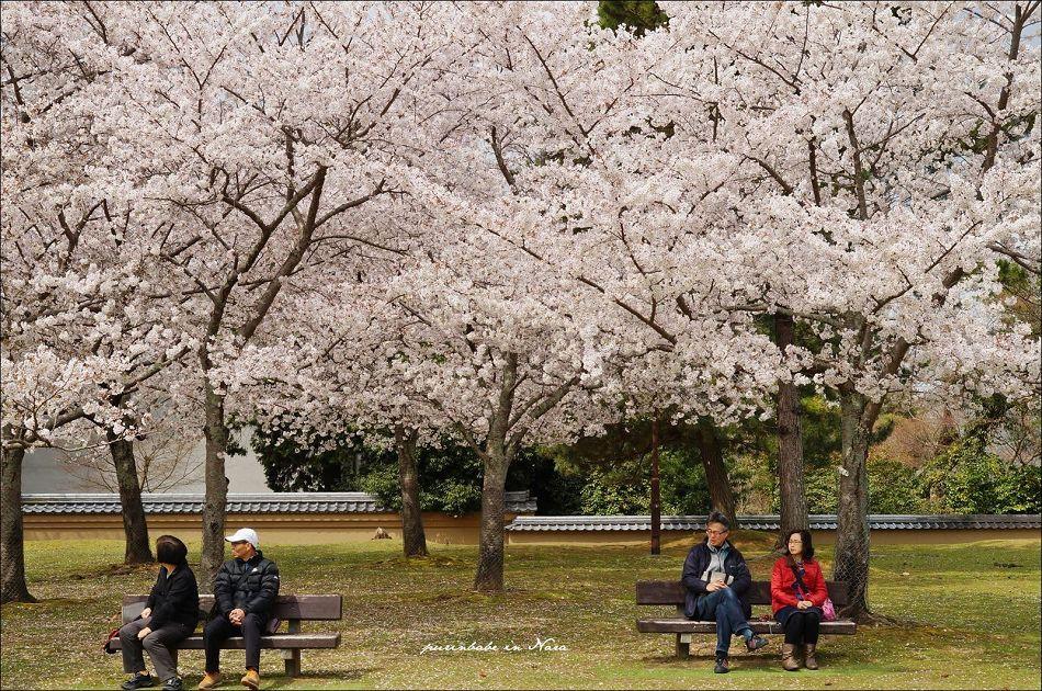 27奈良公園3