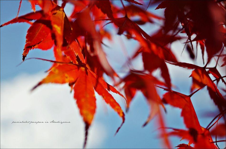 19清涼寺之楓2