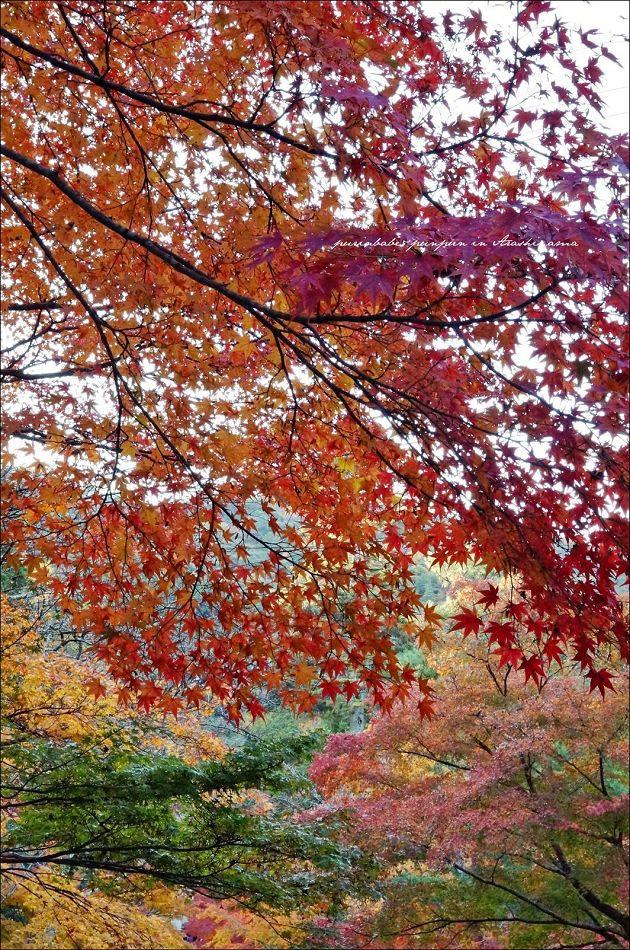5紅葉的馬場2