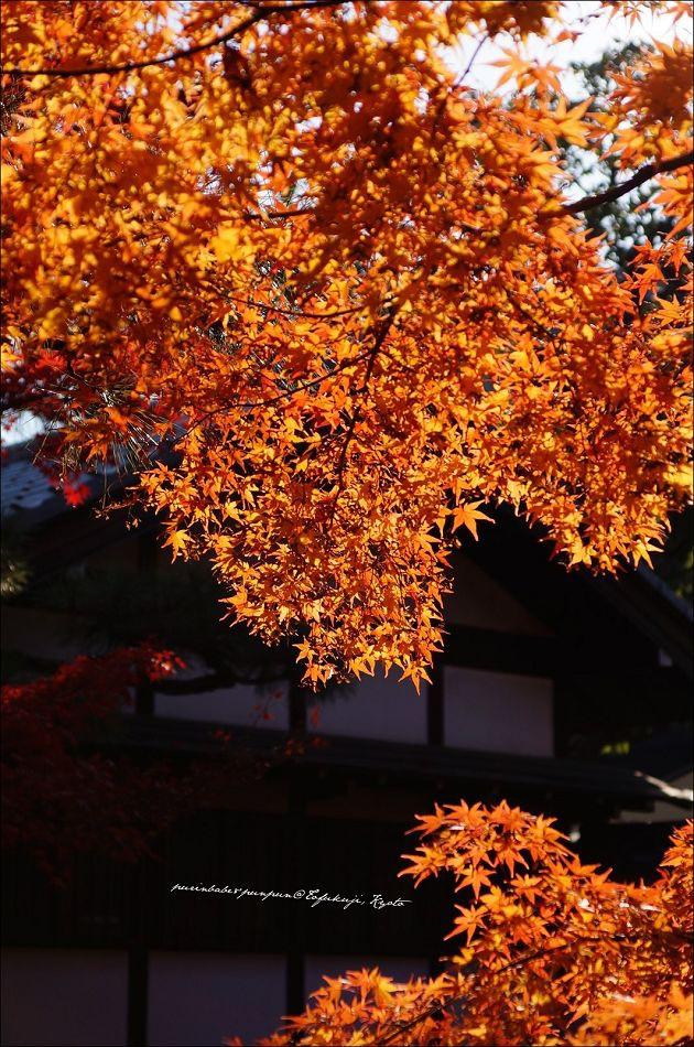 29東福寺之楓6