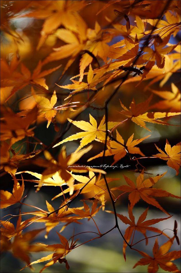 27東福寺之楓4
