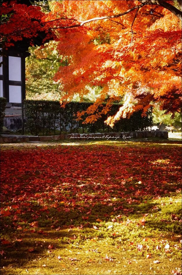 32東福寺之楓9
