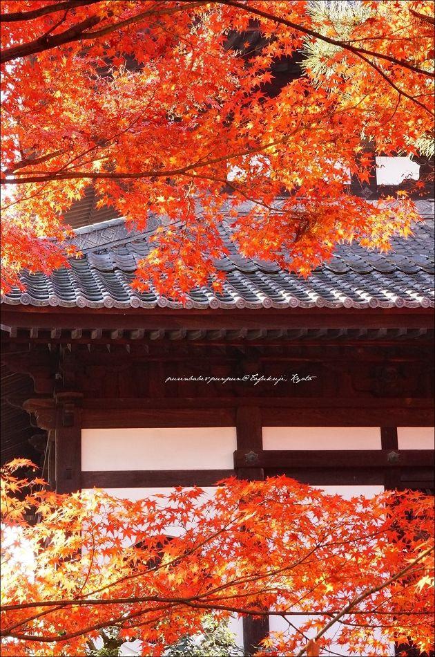 30東福寺之楓7