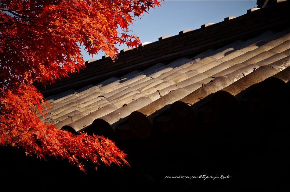 34東福寺之楓11