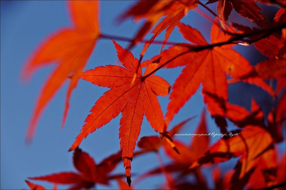 24東福寺之楓1