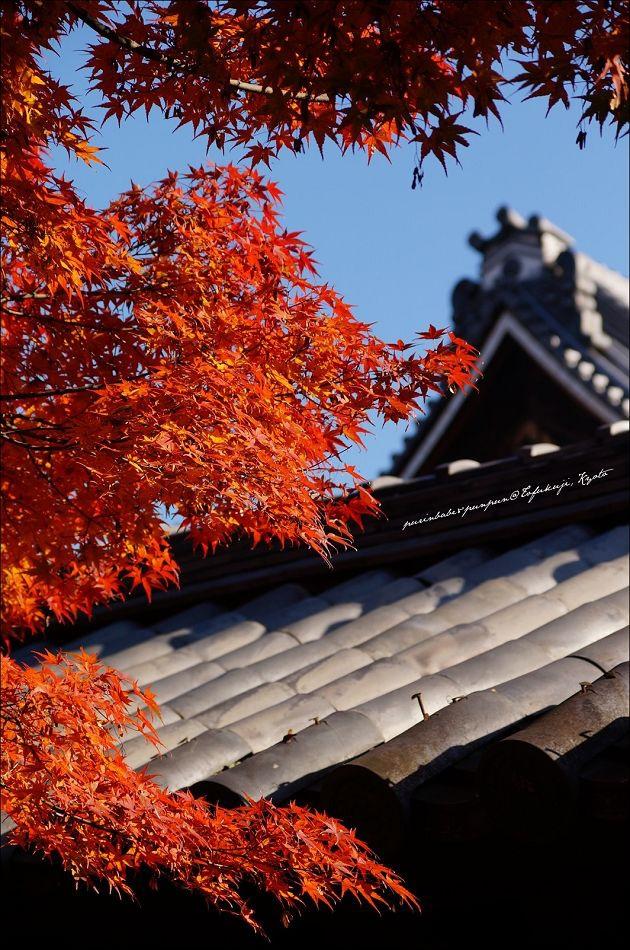33東福寺之楓10