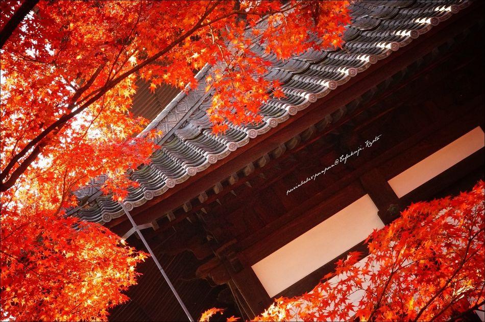 31東福寺之楓8