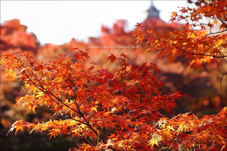28東福寺之楓5